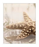 Seashore Starfish Poster by Donna Geissler