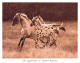 The Appaloosa Lminas por Robert Dawson
