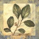 Leaf Botanicals I Prints by Pamela Gladding
