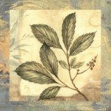 Leaf Botanicals III Prints by Pamela Gladding