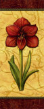 Red Passion Amaryllis Art by Charlene Audrey
