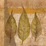 Nature Study II Posters by John Kime