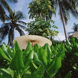 Tropical Plants and Traditional Parasols Photographic Print