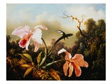 Orchids and Hummingbirds Gicleetryck av Martin Johnson Heade