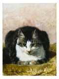 Sitting Pretty Giclee Print by Henriette Ronner