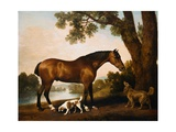 A Bay Hunter, a Springer Spaniel and a Sussex Spaniel Giclee Print by George Stubbs