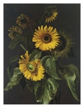 Sunflowers Giclee Print by Louis Apollinaire Sicard