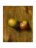 Hanging Apples Giclee Print by Stanley S. David
