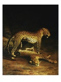 Two Leopards Lying in the Exeter Giclee Print by Jacques Laurent Agasse
