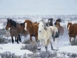 Wild Horses in Snow Fotodruck von Jeff Vanuga