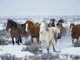 Wild Horses in Snow Photographic Print by Jeff Vanuga