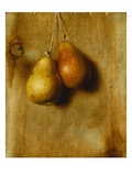 Hanging Pears Giclee Print by Stanley S. David