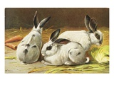 German Postcard Depicting Three Rabbits Giclee Print