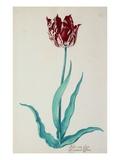 Tulips Giclee Print by Pieter Holsteijn II