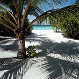 Palm Tree on Sandy Beach Photographic Print