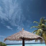 Cabana and Palm Trees Photographic Print