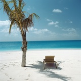 Palm Tree and Beach Chair Photographic Print
