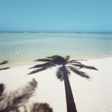 Shadow of Palm Tree on a Beach Photographic Print