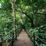 Wooden Bridge Thailand Photographie