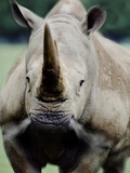 Charging Rhino Photographic Print