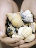 Hands Holding Seashells Photographic Print