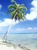 Palm Trees Along Shoreline Photographic Print