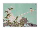 Chrysanthemum and Bird Giclee Print by Hsi-Tsun Chang