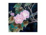 Cotton Roses Giclee Print by Minrong Wu