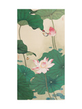 Two Butterflies and Lotuses Impression giclée par Hsi-Tsun Chang