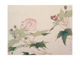 Hibiscus Giclee Print by Hsi-Tsun Chang