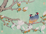 Twin Birds in the Branches Reproduction procédé giclée par Hsi-Tsun Chang