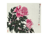 Peonies in Spring Giclee Print by Hsi-Tsun Chang