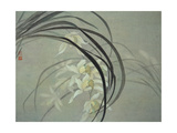 Cymbidium Orchids Giclee Print by Minrong Wu