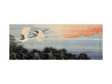 Flying at Dawn Giclee Print by Hsi-Tsun Chang