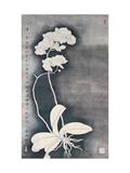Orchids Giclee Print by Hsi-Tsun Chang