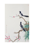Happy Birds in Plum Tree Giclee Print by Hsi-Tsun Chang