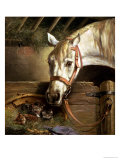 Horse and Kittens, 1890 Giclee Print by Moritz Muller