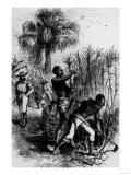 "Slaves Working on a Plantation, from Cassell's ""History of the United States"" Giclee Print"