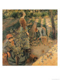 The Apple Pickers, 1886 Giclee Print by Camille Pissarro