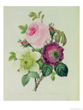 Rose, Anemone and Clematide Giclee Print by Pierre-Joseph Redouté