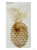 Pineapple Giclee Print by John White