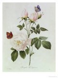 Rosa Bengale the Hymenes Giclee Print by Pierre-Joseph Redouté