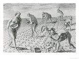 "Florida Indians Planting Maize, from ""Grandes Voyages"" 1591, Written and Engraved by Theodor De Bry Giclee Print by Jacques Le Moyne"