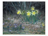Narcissi and Violets, circa 1867 Giclee Print by Jean-François Millet