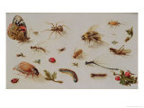 A Study of Insects Giclee Print by Jan Brueghel the Younger