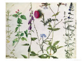 Eight Studies of Wild Flowers Gicl&#233;e-Druck von Albrecht D&#252;rer