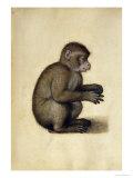 A Monkey Giclee Print by Albrecht Dürer