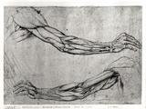 Study of Arms Gicl&#233;e-Druck von Leonardo da Vinci 