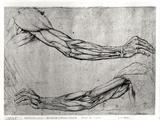 Estudio de brazos Lámina giclée por  Leonardo da Vinci