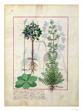 "Illustration from the ""Book of Simple Medicines"" by Mattheaus Platearius (D.circa 1161) circa 1470 Premium Giclee Print by Robinet Testard"